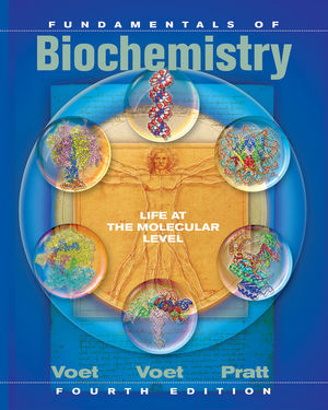 What is the overview structure of the protein?