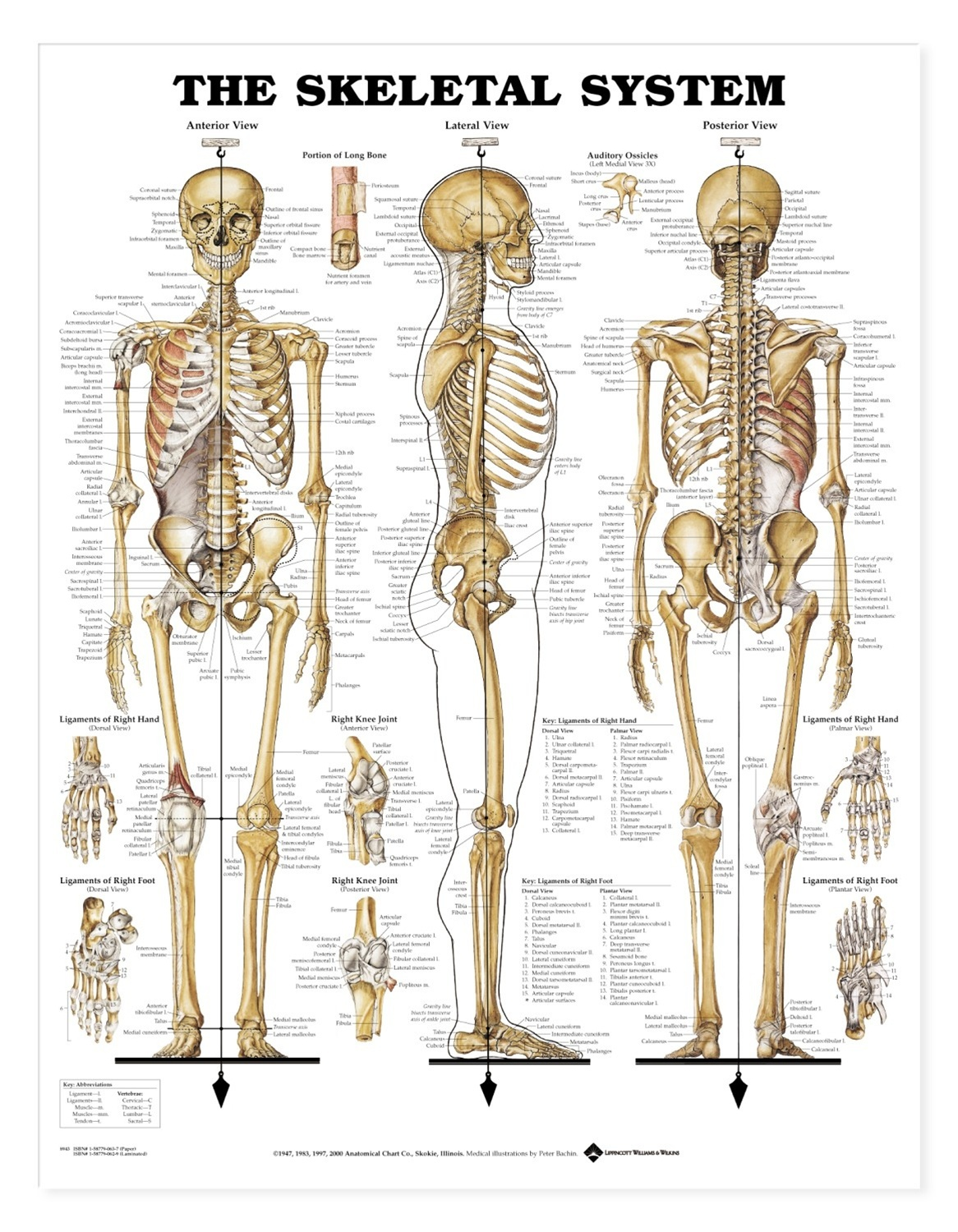 chapter 8 skeletal system