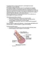 What are the processes involved in the neuromuscular junction?