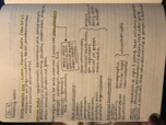 MGMT 3013 - Class Notes - Week 3