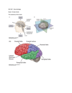 What is the function of diencephalon?