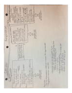 What is the meaning of glycolysis in the cell?