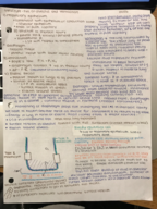 BMS 300 - Class Notes - Week 11