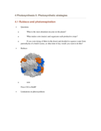 how do c4 plants avoid photorespiration