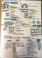 INTB 3654 - Study Guide
