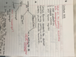 ECO 2013 - Class Notes - Week 7