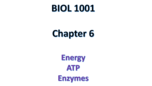BIOL 1001 - Class Notes - Week 7