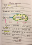 BIO 181 - Class Notes - Week 5