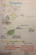 BIO 181 - Class Notes - Week 6