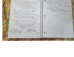 business and society notes