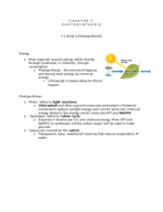 In biology, what is the chloroplast?