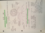 What are light dependent reactions?