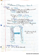What are the coding strands of rna?