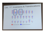 How does a chromosome inversion occur?
