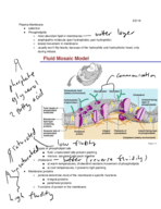 What are the roles of the plasma membrane?