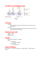 What is the formation of a polypeptide chain?